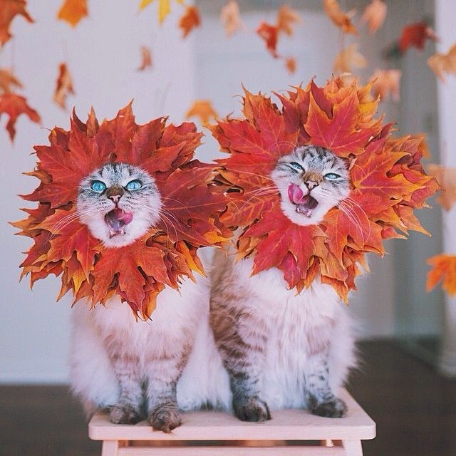 http://www.lovethispic.com/uploaded_images/135623-Autumn-Cats.jpg