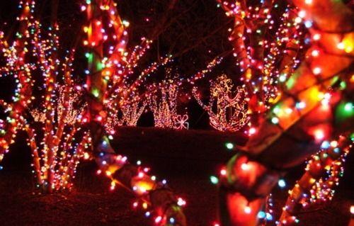 festive christmas lights