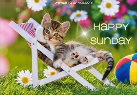 Image result for happy sunday cat