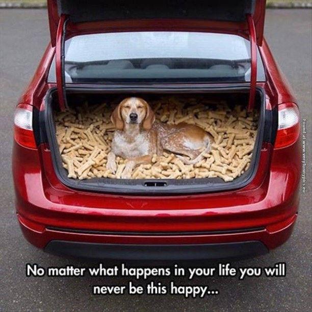 Happiest Dog