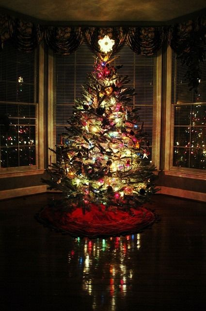 Night Christmas Tree Pictures Photos And Images For