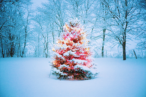 Natures christmas tree pictures photos and images for