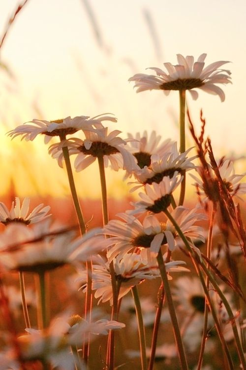 Inspiring Quotes For Friends Flowers At Sunrise Pic...