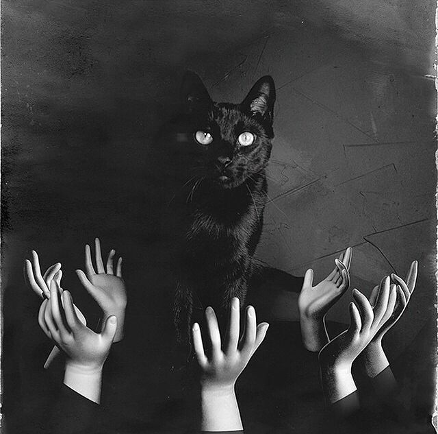 Creepy Black Cat Pictures, Photos, and Images for Facebook ...
