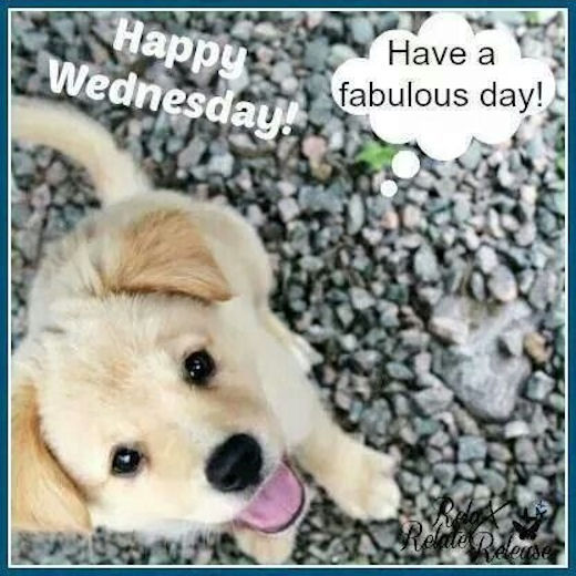 Happy Wednesday Pictures, Photos, And Images For Facebook