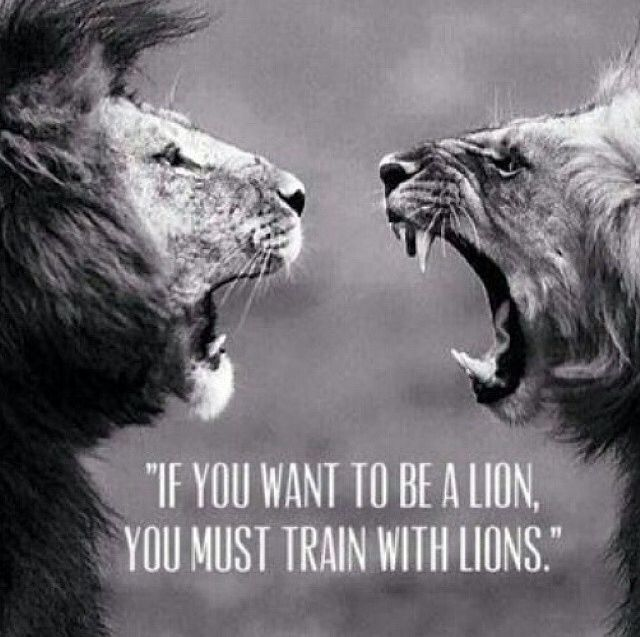 Train With Lions Pictures Photos And Images For Facebook