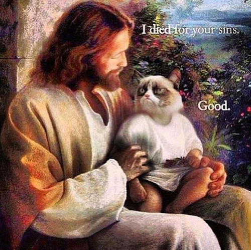 Funny Images Of Grumpy Cat