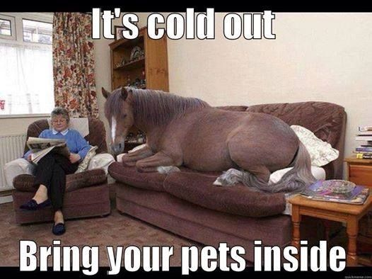 It 39 s cold outside bring your pets inside pictures photos and images for facebook tumblr - Maiale sul divano ...