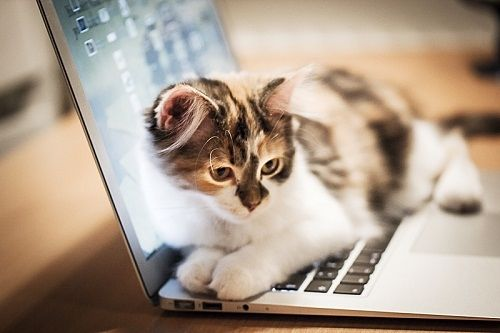 Cat On The Computer