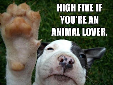 animal loves