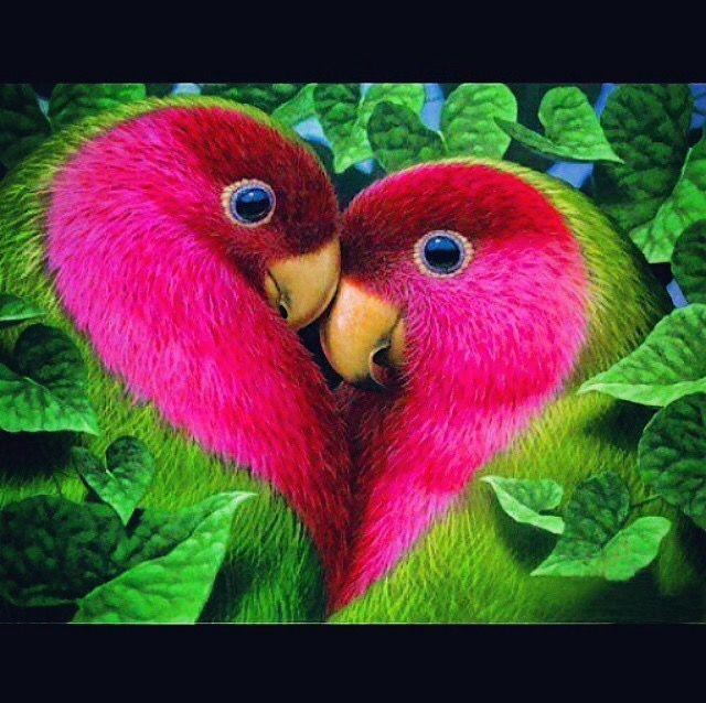 how to grow love birds