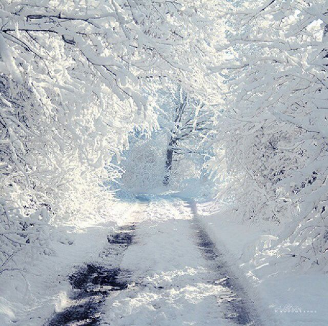 Its Finally Winter Pictures Photos And Images For