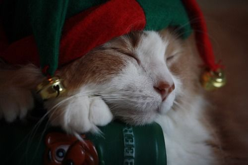 sleeping elf kitty pictures photos and images for facebook tumblr