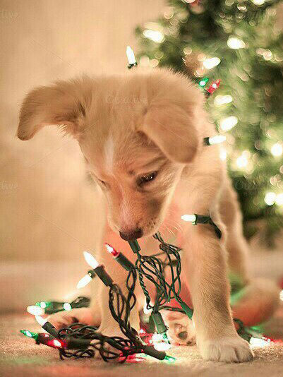 puppy with christmas lights pictures photos and images for