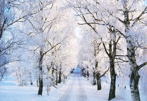 Frozen Winter Trees Pictures, Photos, and Images for ... Pictures Trees In Winter Pinterest