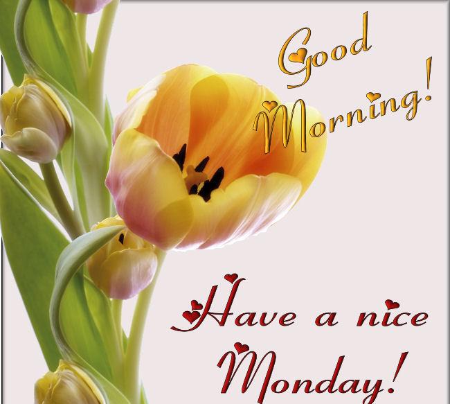 Good Monday Morning Folks