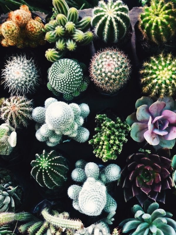 variety of cactus plants pictures photos and images for facebook