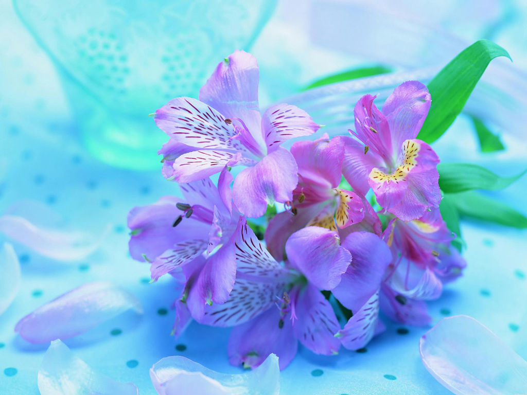 151649 Beautiful Fresh Flowers