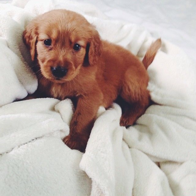 Adorable Little Puppy Pictures Photos And Images For