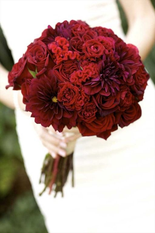 Red Roses Bouquet Pictures Photos And Images For