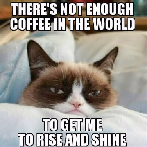 I Hate May The 4th Be With You: Not Enough Coffee In The World Grump Cat Pictures, Photos