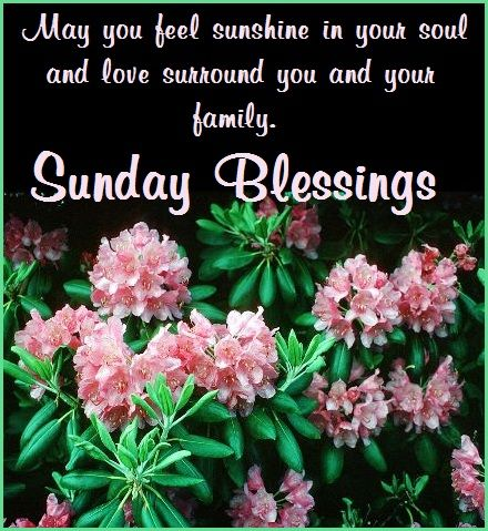 may you feel sunshine in your soul and love surround you and your family sunday blessings