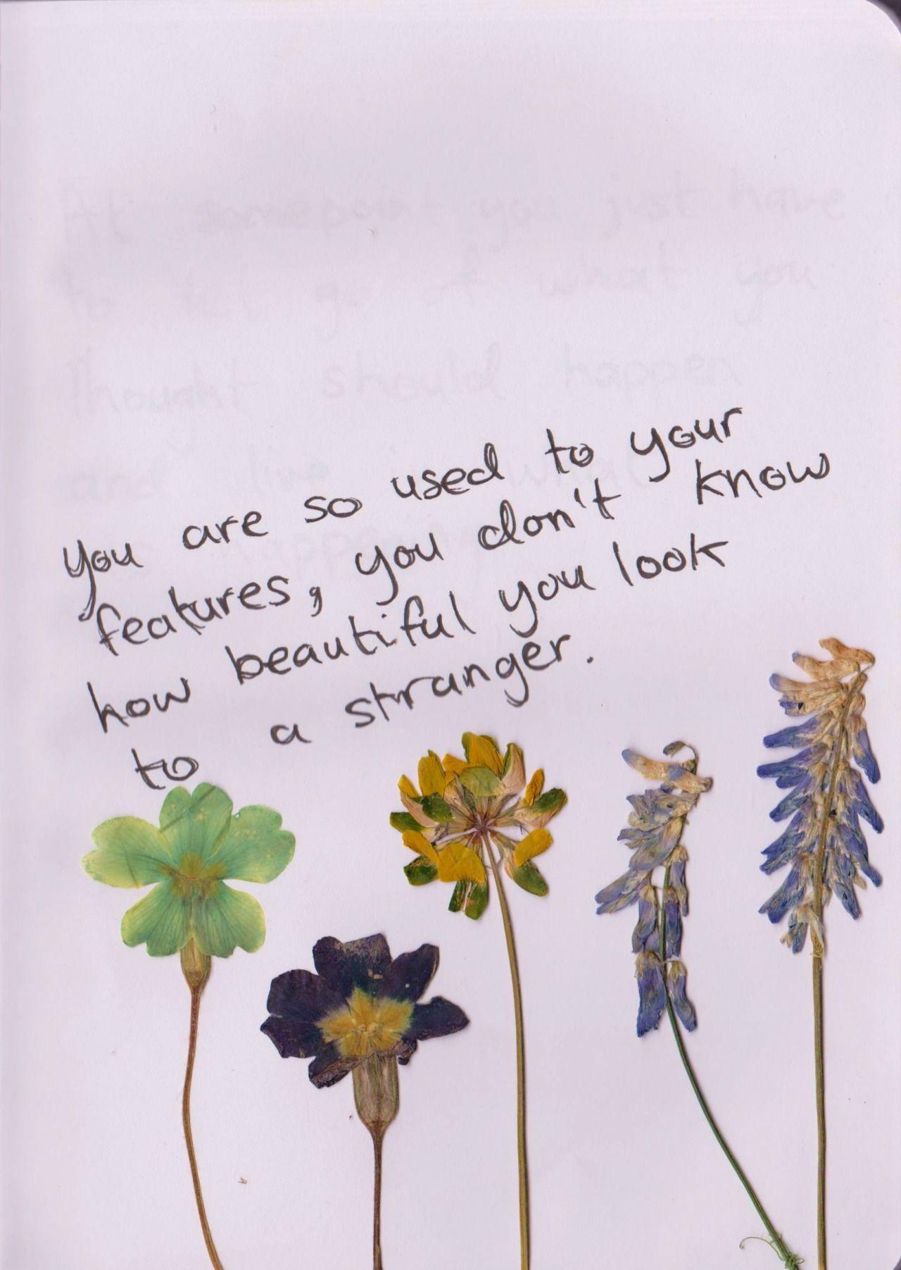 Dried Flowers Ideas Pressed