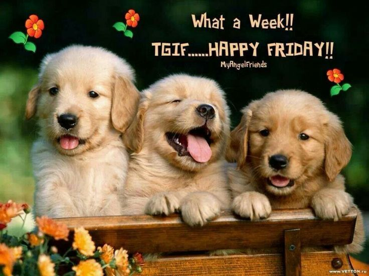 Image result for happy friday funny dogs