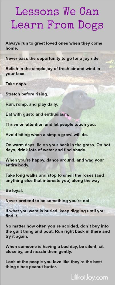 Things we can learn from dogs: Anecdote