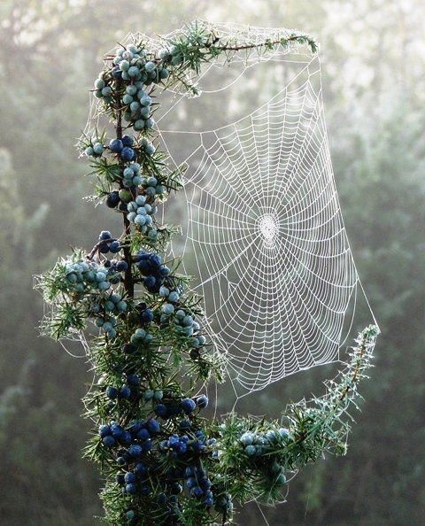 Wedding Lights Ideas: Spiderweb & Blueberries Pictures, Photos, And Images For