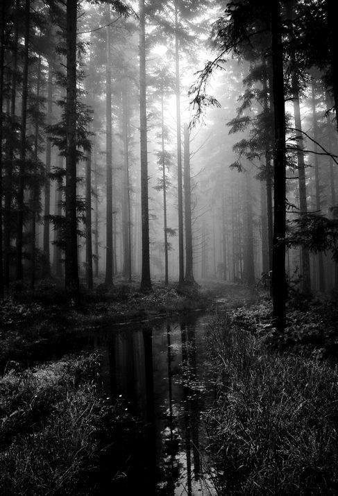 Black and white forest...
