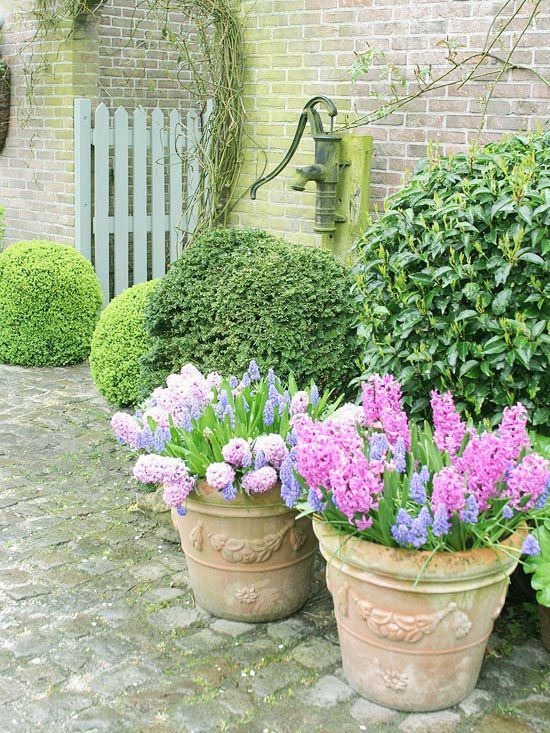 Spring Containers With Hyacinth Bulbs Pictures Photos