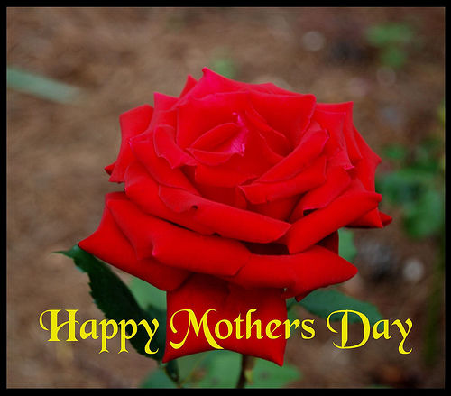 Happy Mothers Day Rose Pictures, Photos, and Images for ...