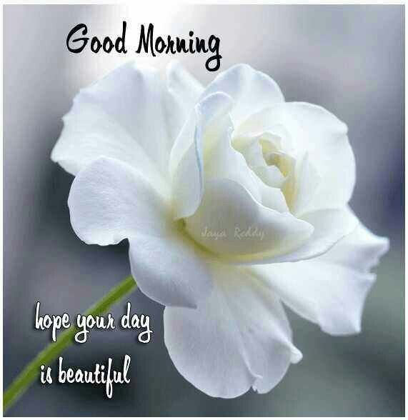 Good Morning My Beautiful Friend Quotes: Good Morning Hope Your Day Is Beautiful Pictures, Photos