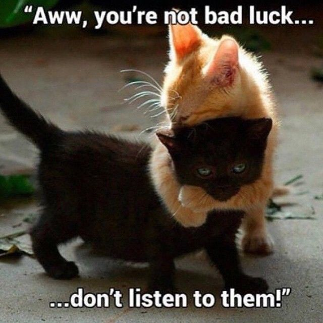 Youre Not Bad Luck Pictures, Photos, and Images for ...