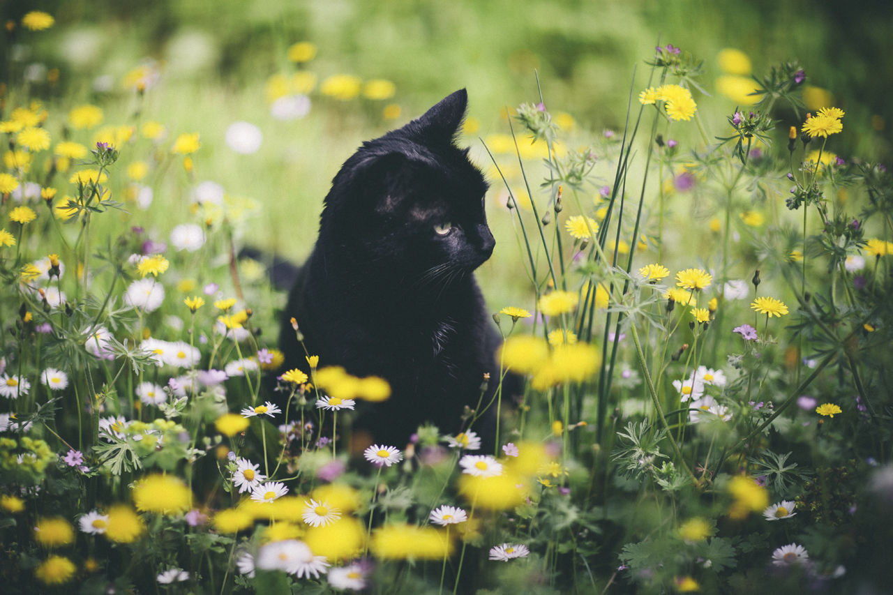 cat and spring flowers pictures photos and images for