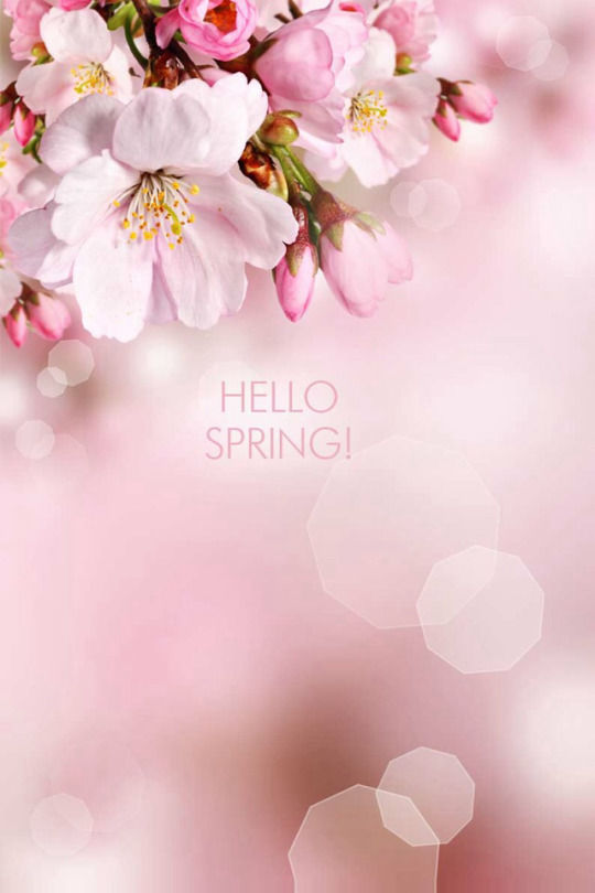 Hello spring with flowers pictures photos and images for facebook hello spring with flowers mightylinksfo