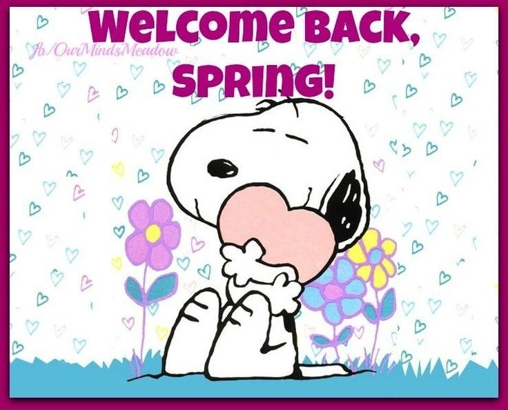 welcome back spring pictures photos and images for
