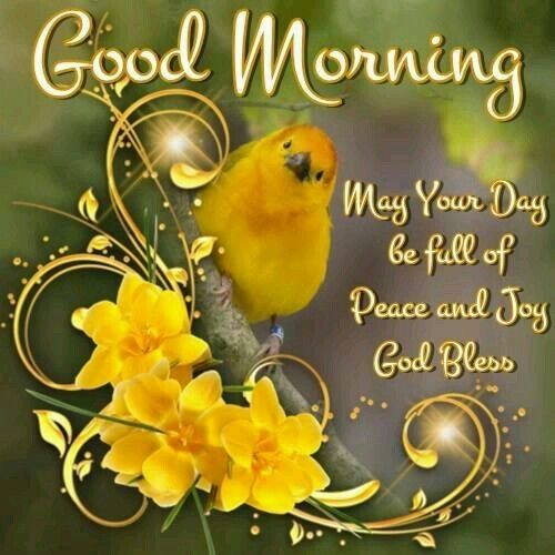 Good Morning God Bless Pictures Photos And Images For Facebook