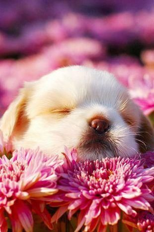 Adorable Puppy Sleeping On Flowers Pictures Photos And