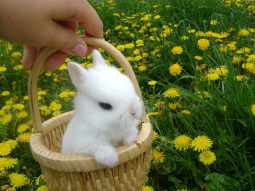 Cute Bunny In A Basket Pictures Photos And Images For