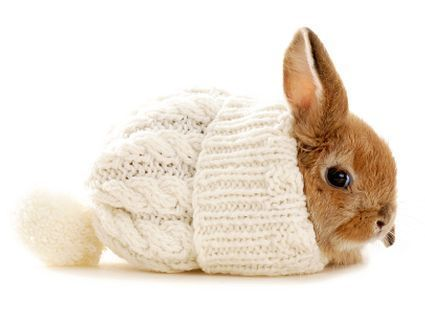 cute little bunny in winter hat pictures photos and images for