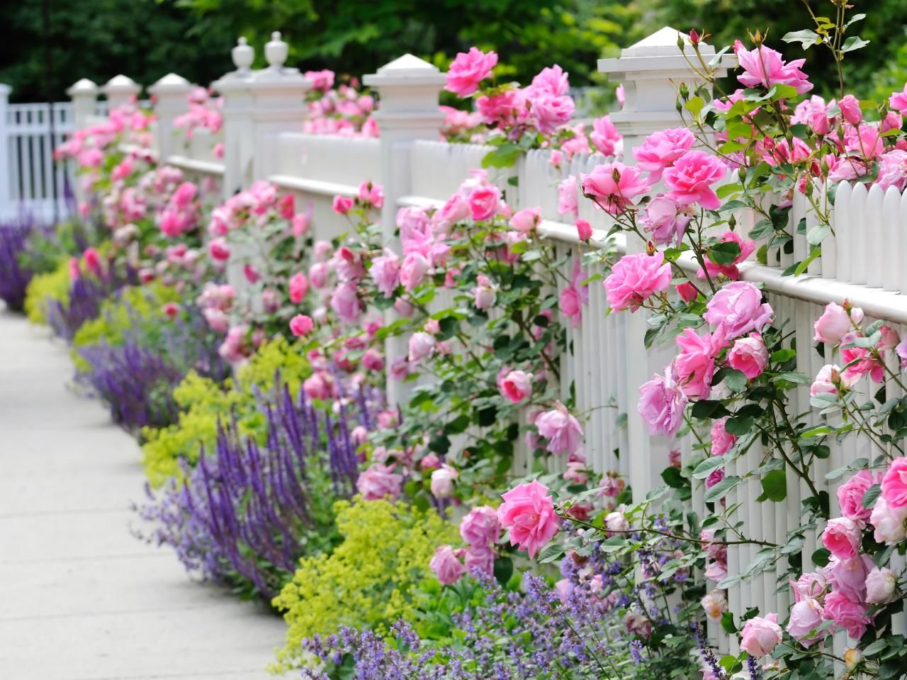 Flowers Along White Picket Fence s and for Tumblr Pinterest