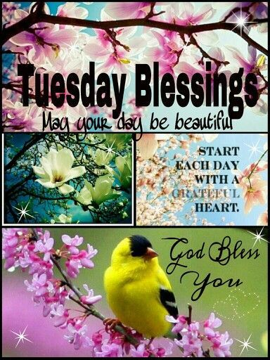 Image result for tuesday blessing quotes