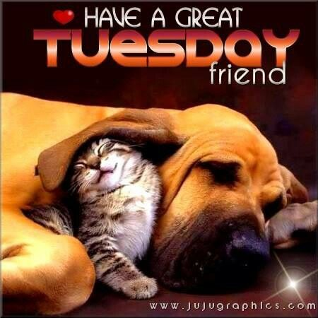 have a great tuesday friend pictures photos and images for facebook