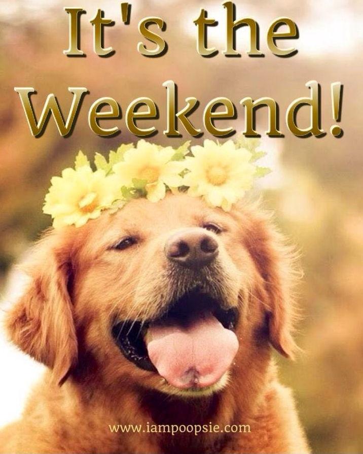 Happy Saturday Dog Pictures