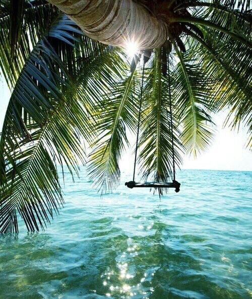 Palm Tree Swing Pictures, Photos, and Images for Facebook ...