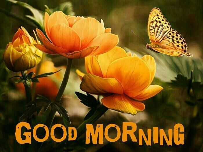 Good Morning Orange Flowers : Good morning flowers pictures photos and images for