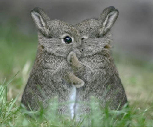 sweet bunny hug pictures photos and images for facebook tumblr
