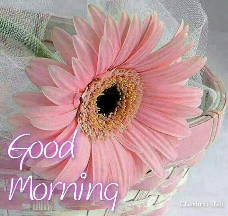 Good Morning Flowers Gif Good Morning Flower